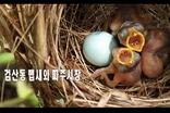 [영상에세이] 검산동 뱁새와 파주시장